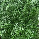 All Green Decor Jardim Vertical Preservado 6